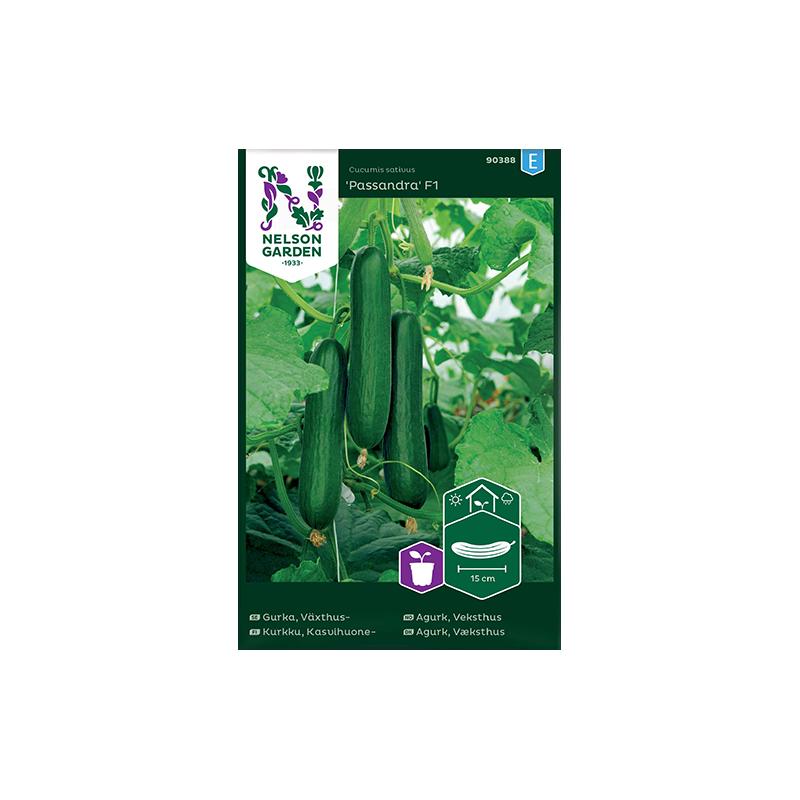 Växthusgurka Passandra